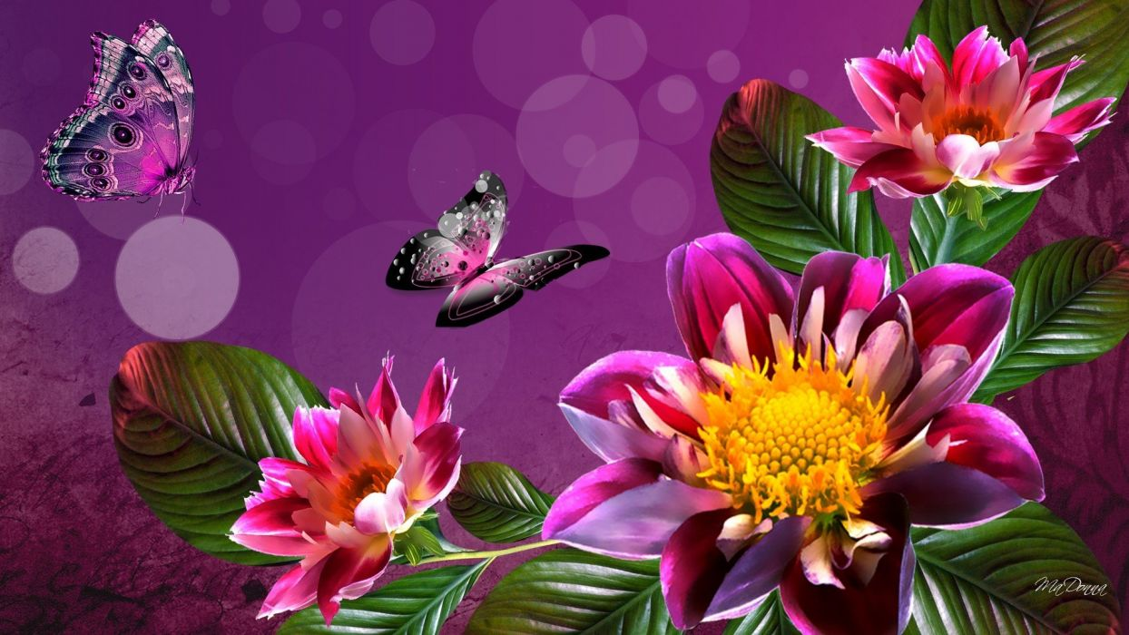 dahlia butterfly digital  wallpaper