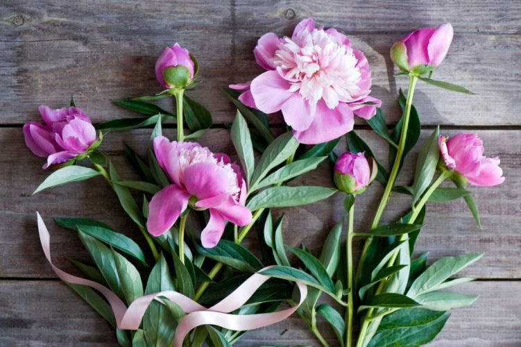 peony buds ribbons wallpaper