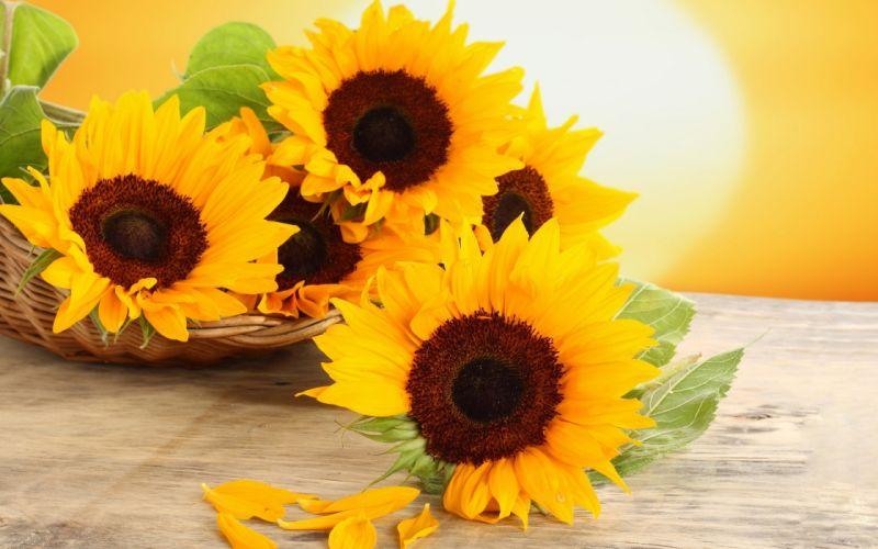 flowers petals table basket sunflowers yellow wallpaper