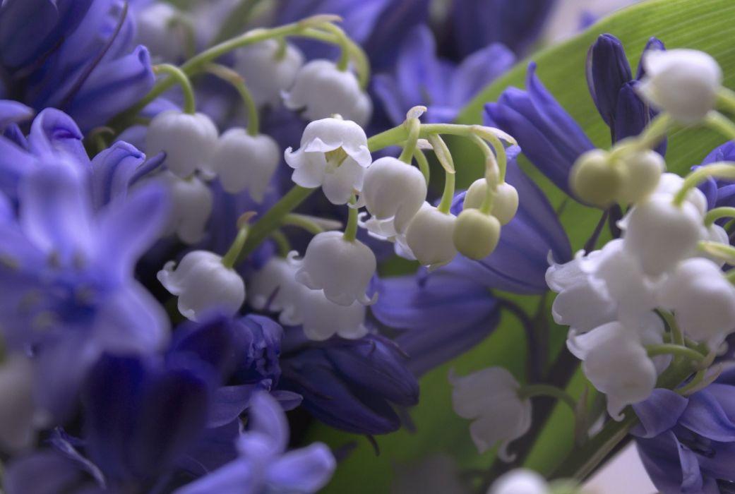 lilies bells wallpaper