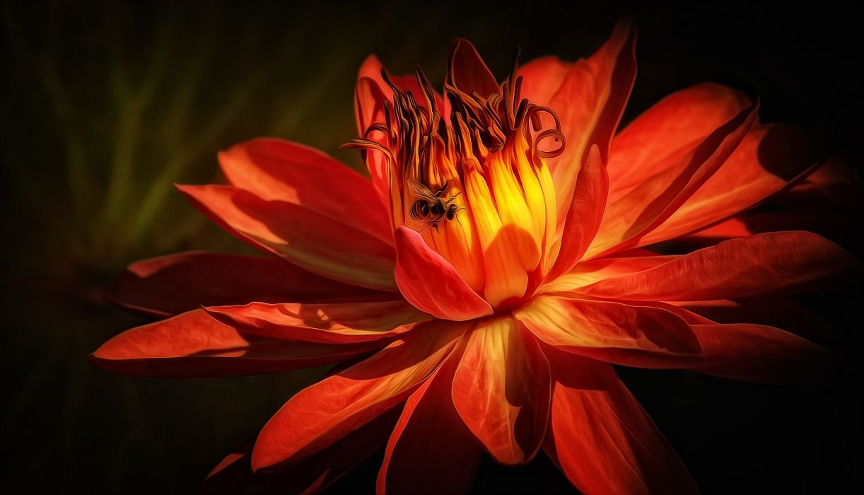 Lily lilies flowers flora wallpaper