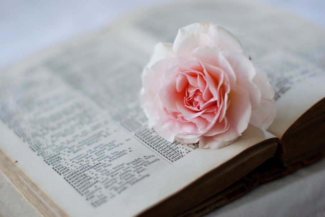 rose flower page book dictionary pink wallpaper
