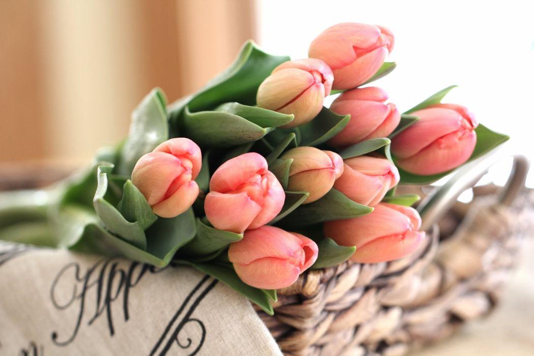 tulips buds bouquet wallpaper