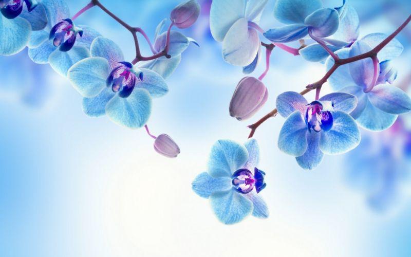 flowers orchid background bloom petals wallpaper