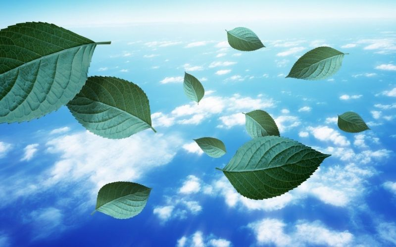 leaves clouds wallpaper
