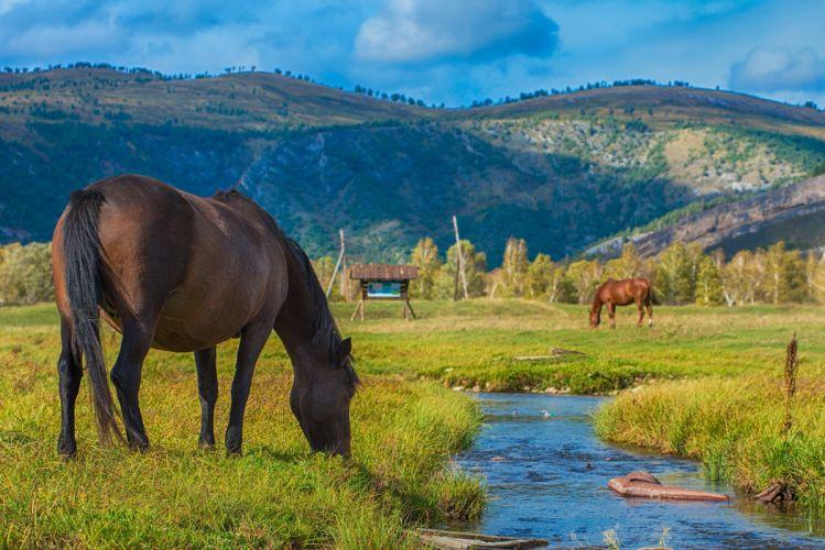 horse grazing creek mountains wallpaper