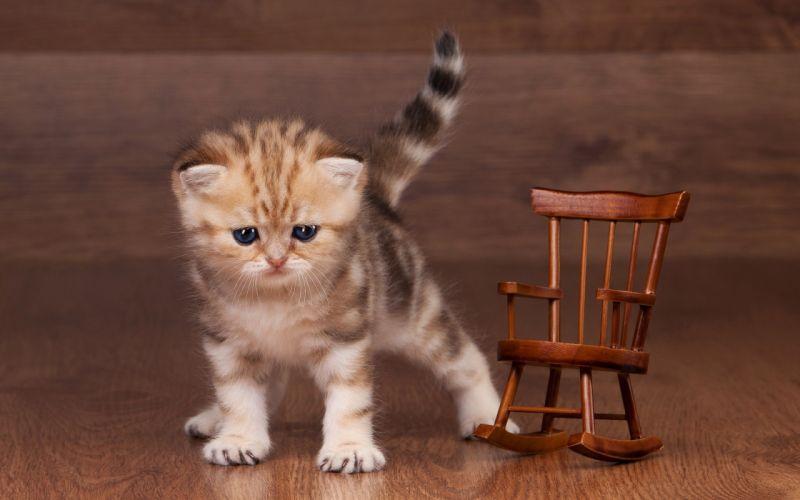 kitten redhead cat baby wallpaper