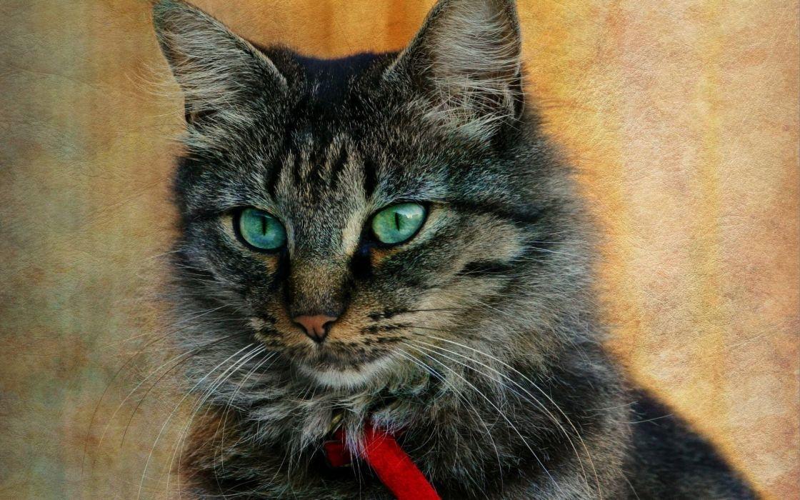 cat portrait wallpaper