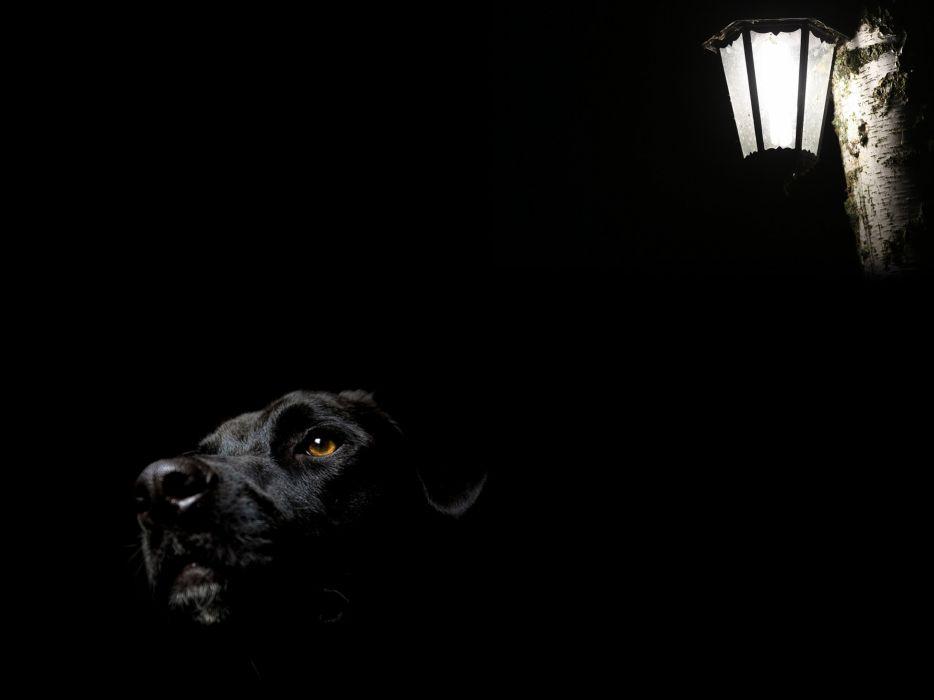 dog light wallpaper