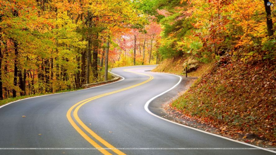 carretera curvas arboles cuneta naturaleza wallpaper