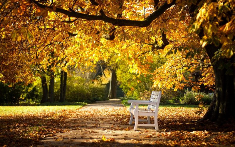 park autumn bench nature wallpaper