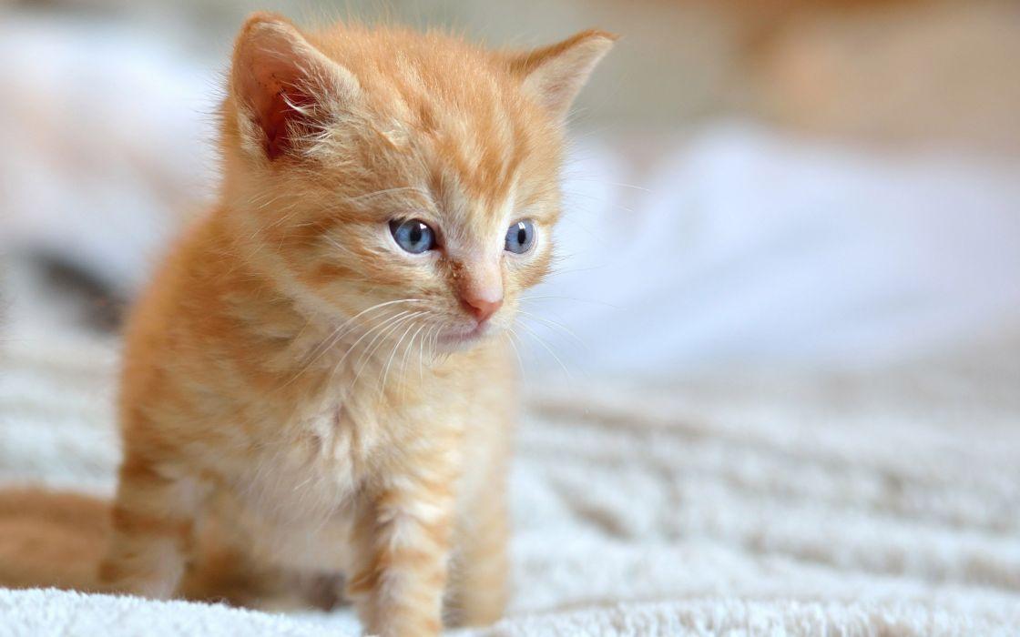 cute animal kitty baby wallpaper