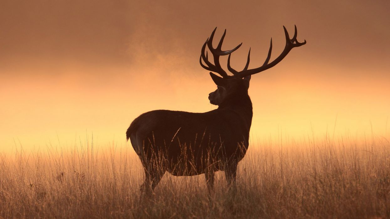 deer animal cute wallpaper