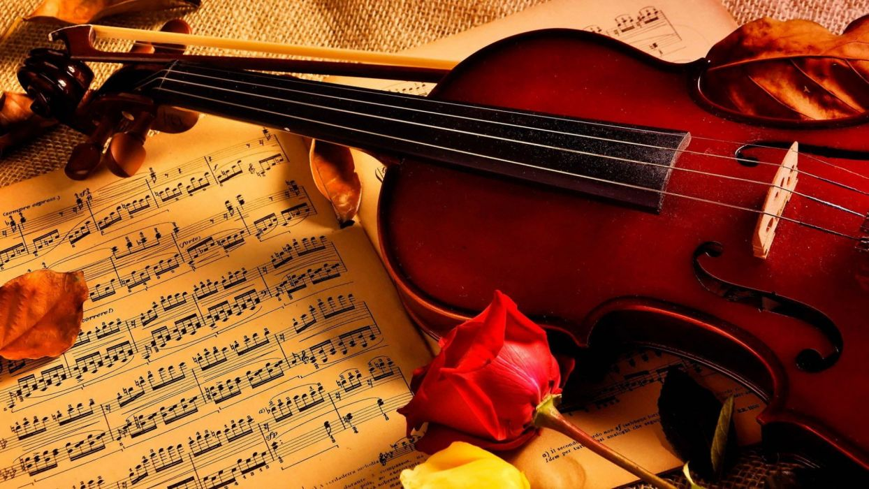 Violin Notes Rose Beauty Music Wallpaper