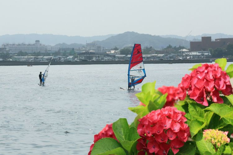 flower sea sport peoples wallpaper