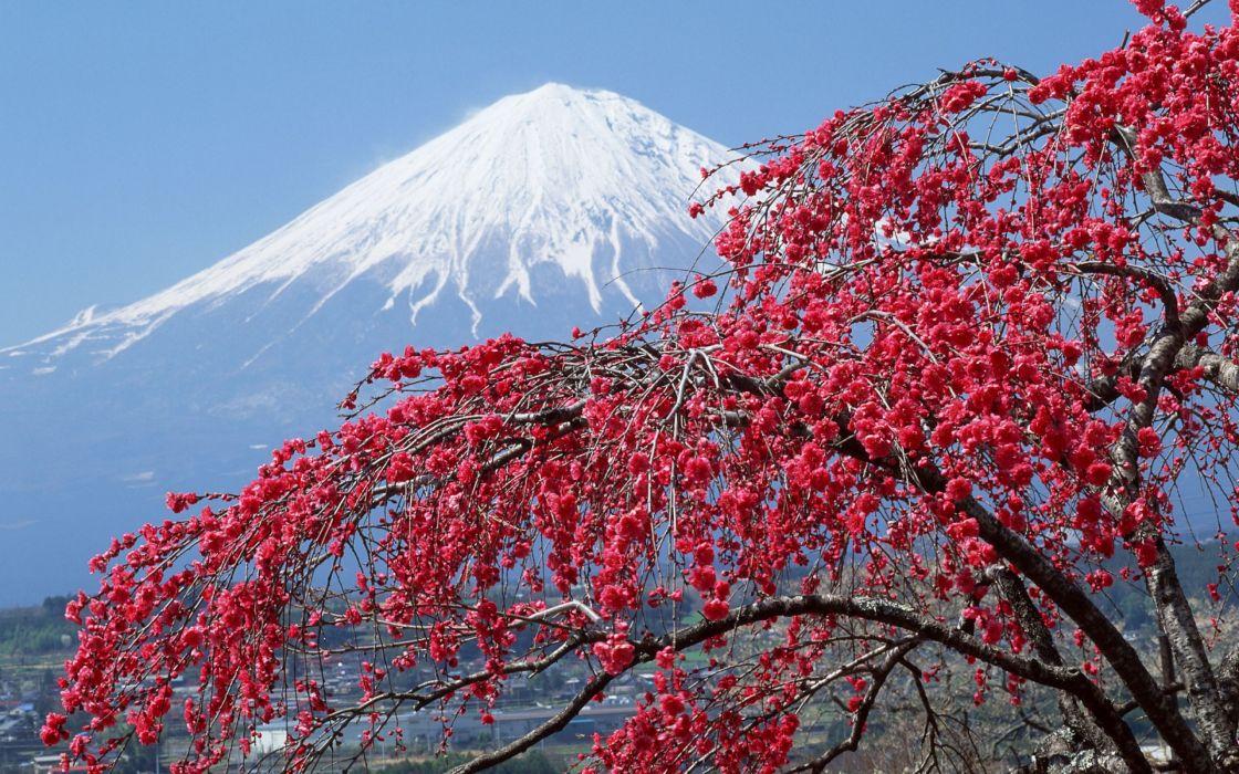 monte fuji flor cerezo paisaje naturaleza wallpaper