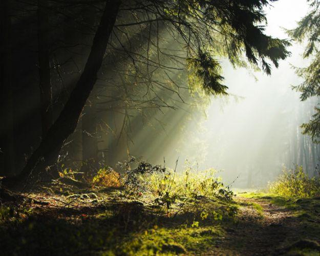 rayos sol selva naturaleza arboles wallpaper
