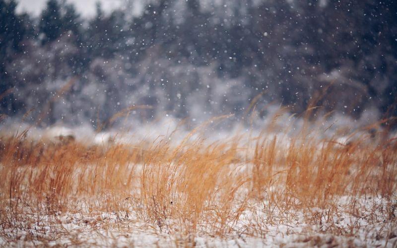 winter snow nature landscape wallpaper