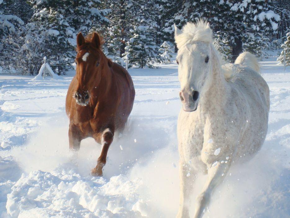 winter snow nature landscape horse horses wallpaper