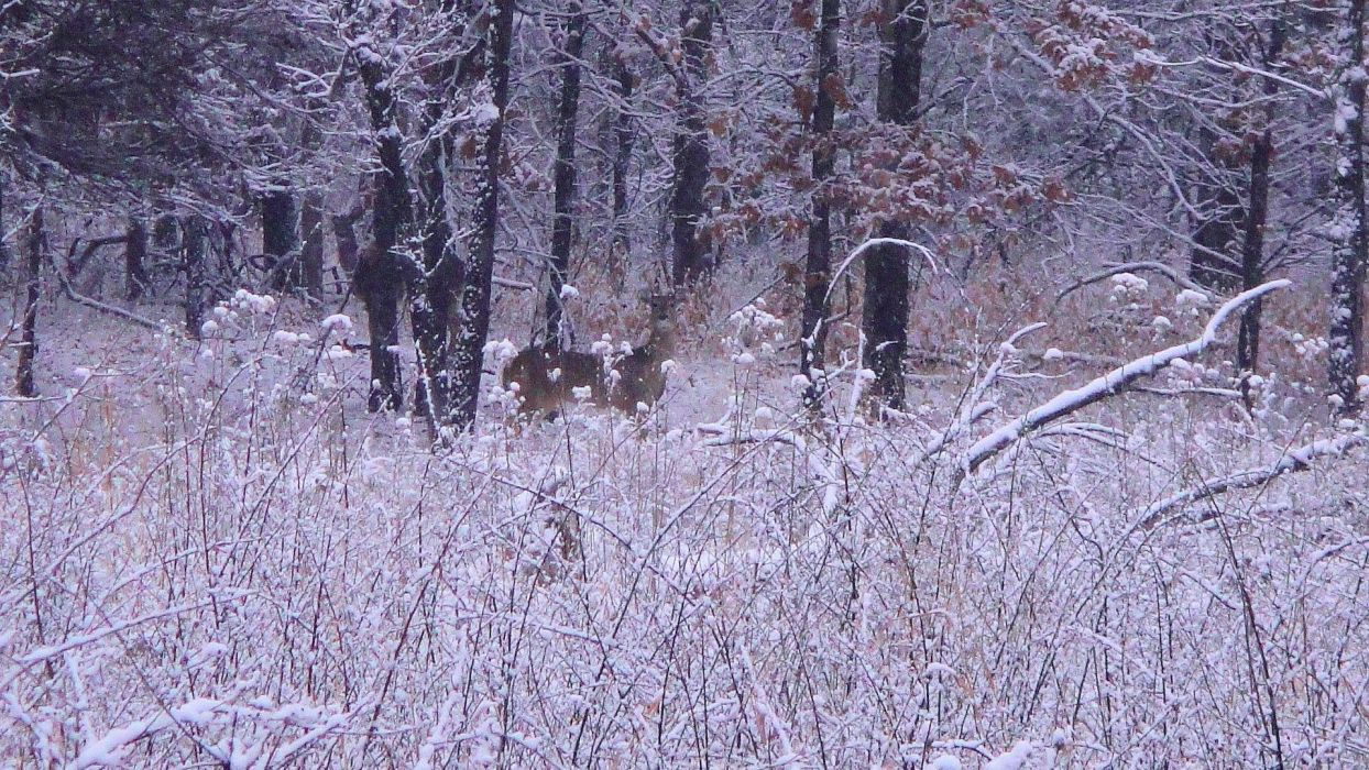 winter snow nature landscape deer wallpaper