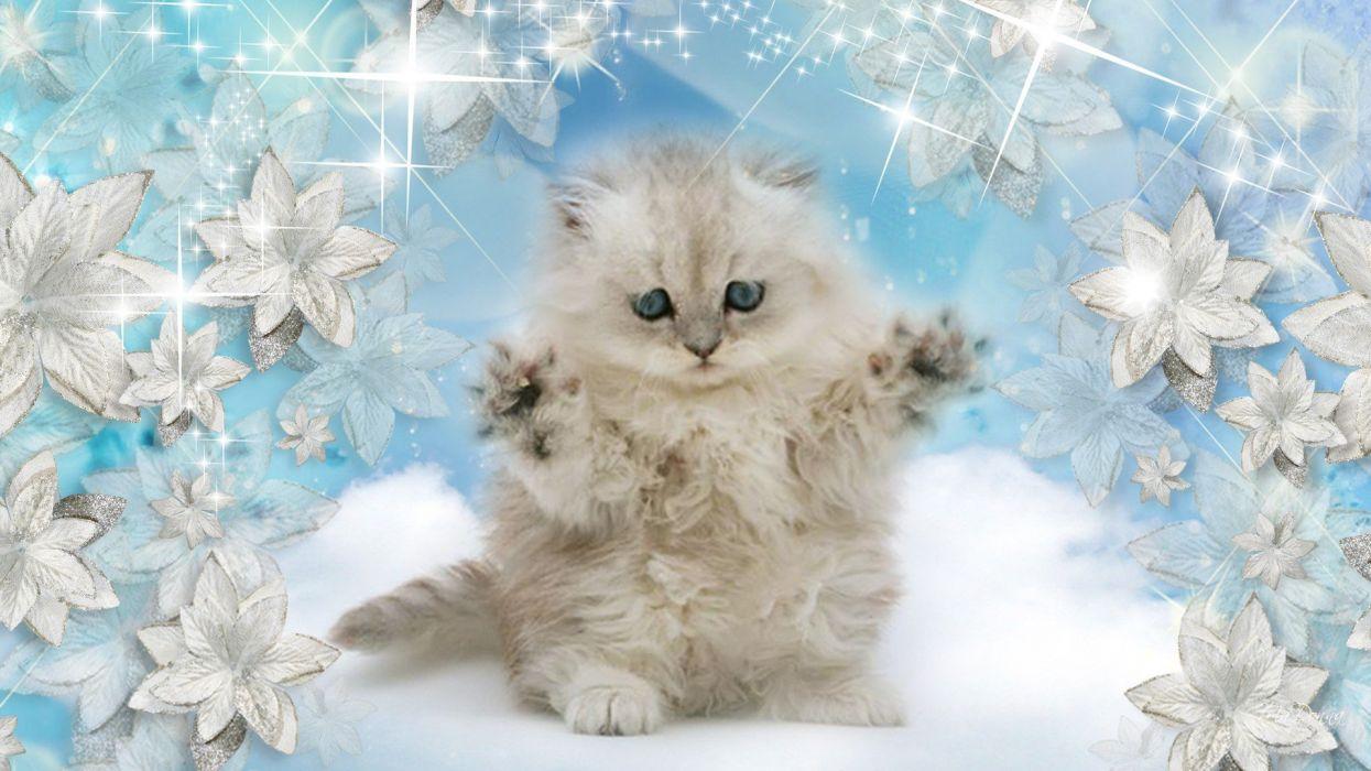 winter snow nature landscape baby cat kitten wallpaper