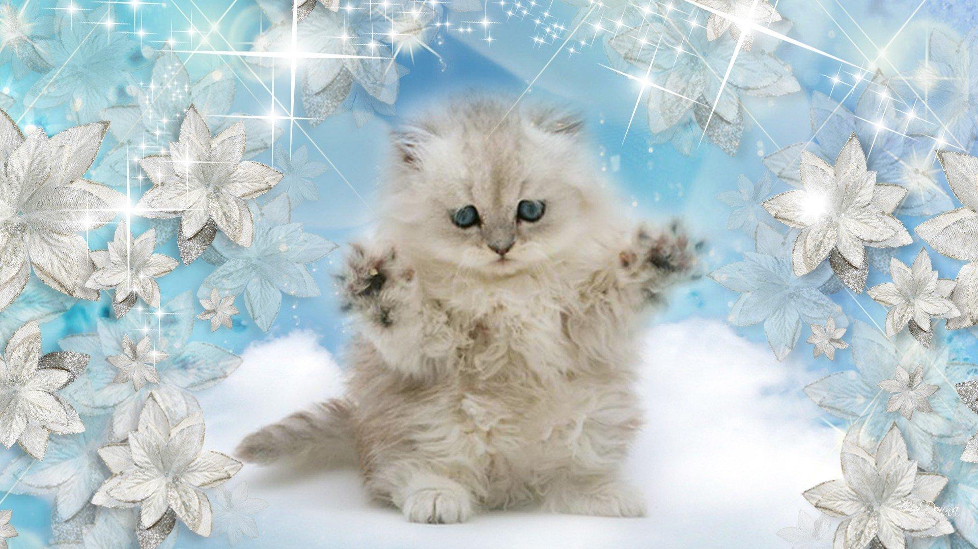 Winter snow nature landscape baby cat kitten wallpaper - Kitten wallpaper ...