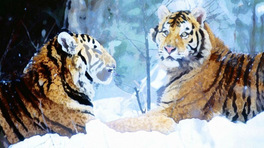 winter snow nature landscape tiger art artwork wallpaper