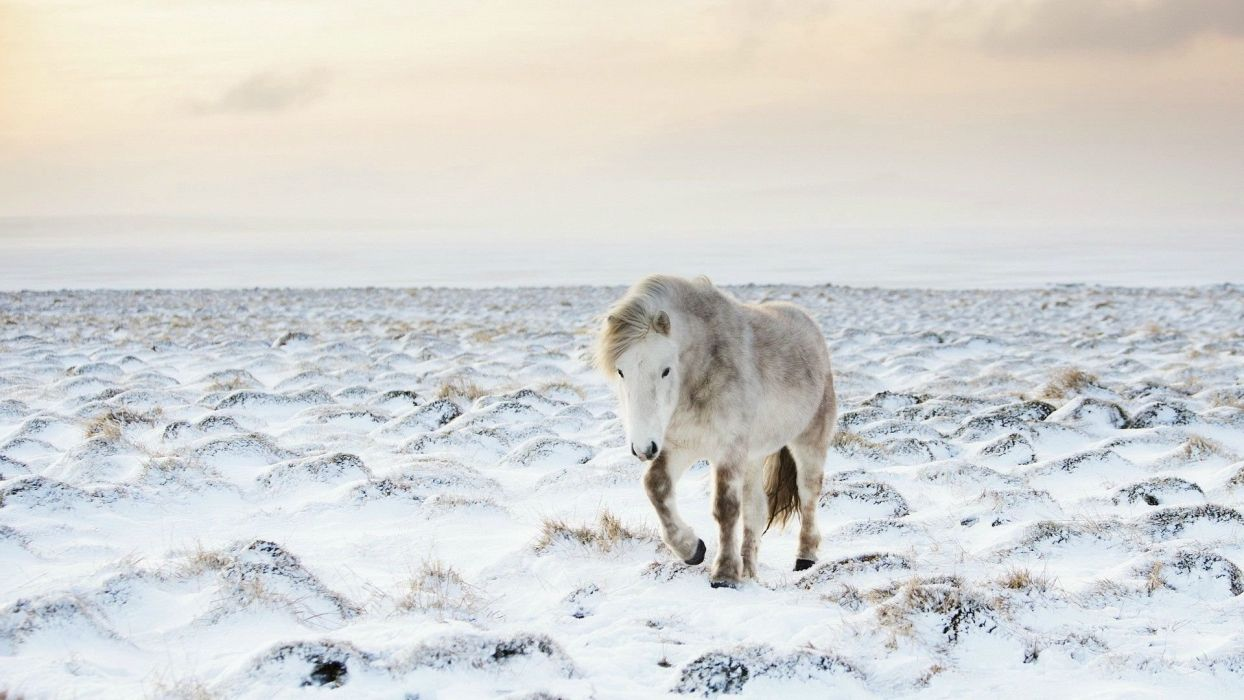 winter snow nature landscape horse wallpaper