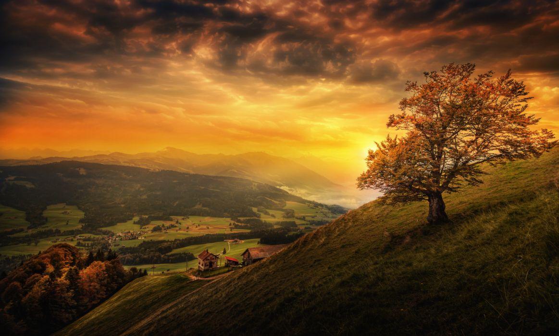 tree landscape nature Switzerland autumn wallpaper