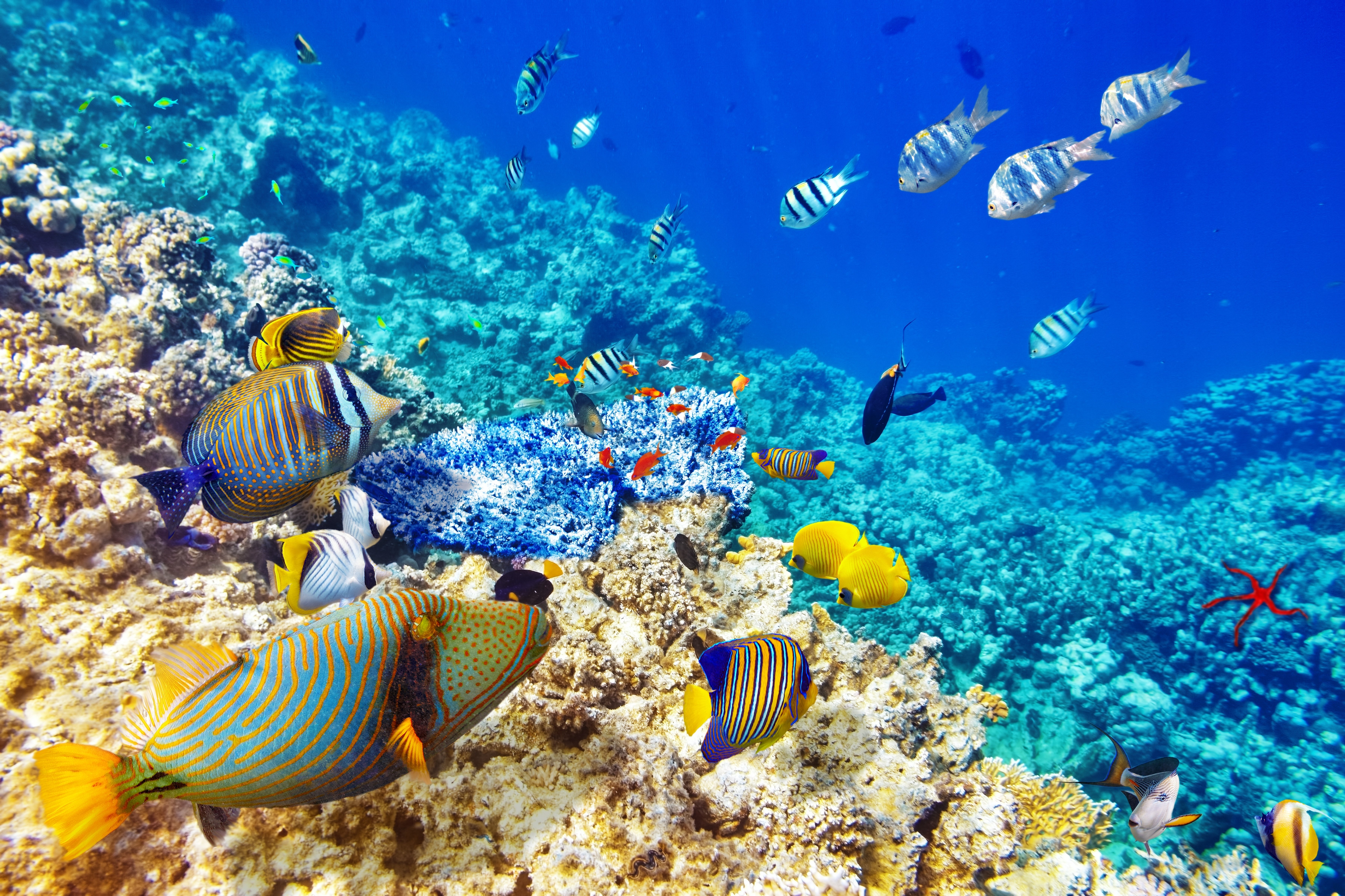 Underwater World Ocean Fish Coral Reef Wallpaper