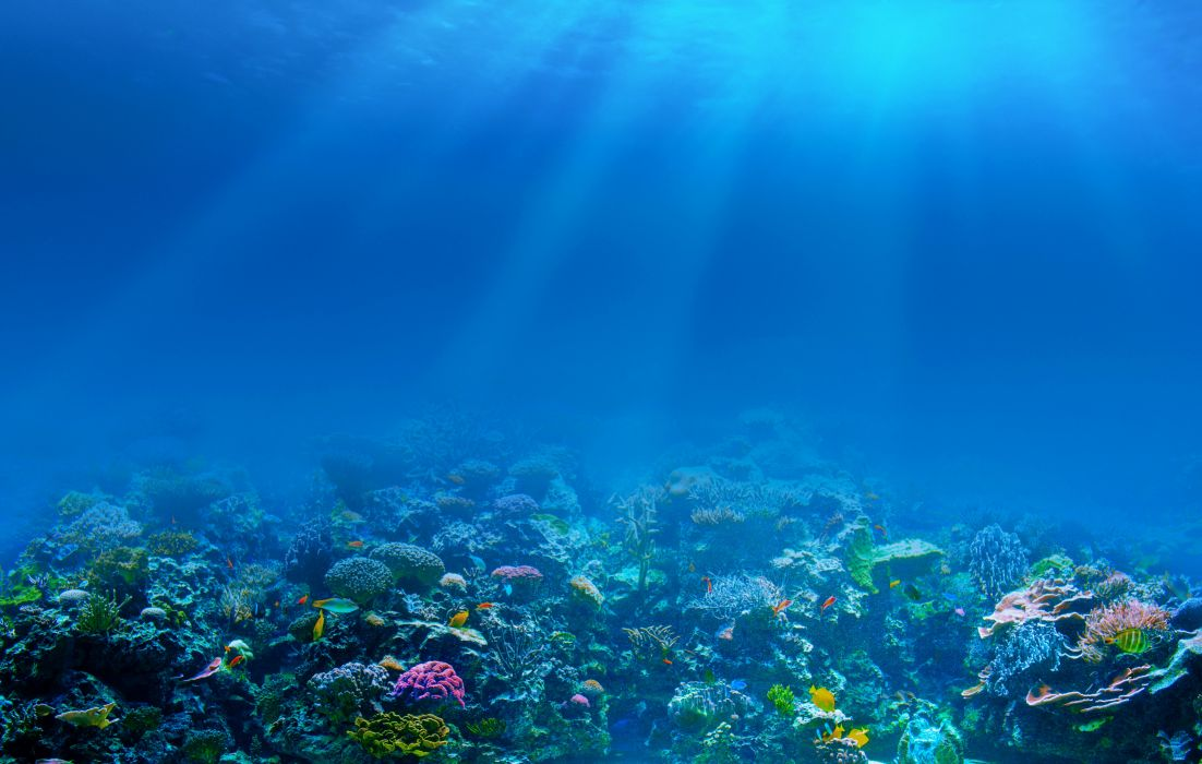 sea underwater corals fishes rays wallpaper