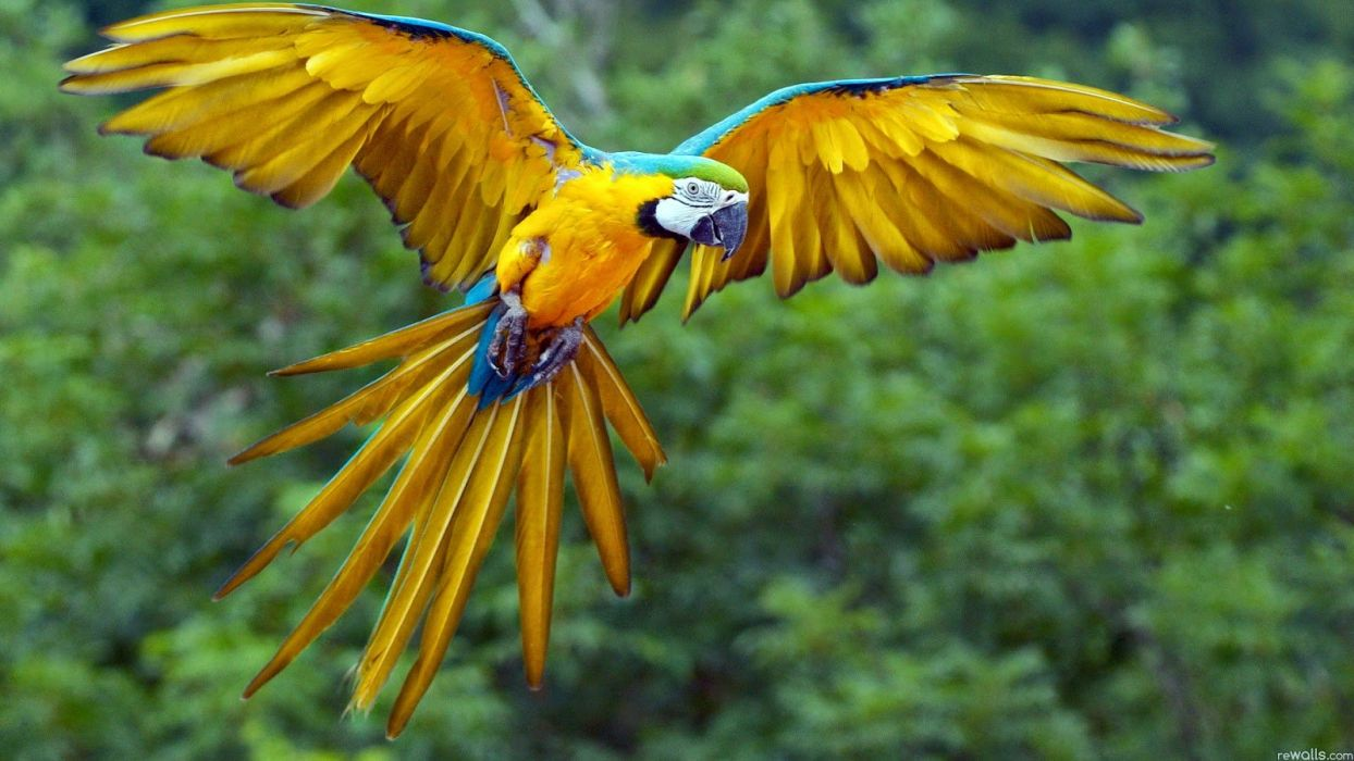 colorful parrot bird cute animal nature beauty wallpaper