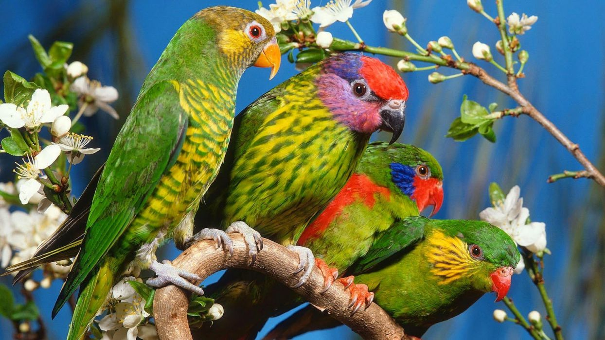 adorable animal beauty bird nature parrot-colored flowers wallpaper