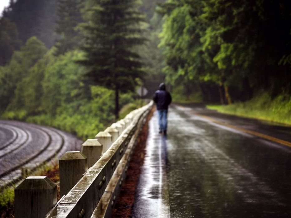 man walking path natural beauty of the rain forest wallpaper