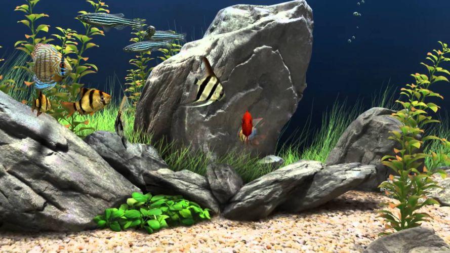 peces acuario agua dulce wallpaper