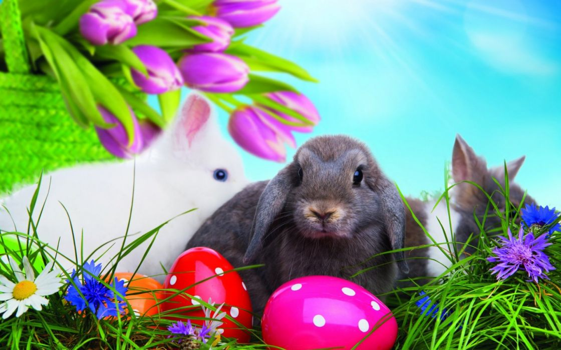 huevos conejo pascuas wallpaper