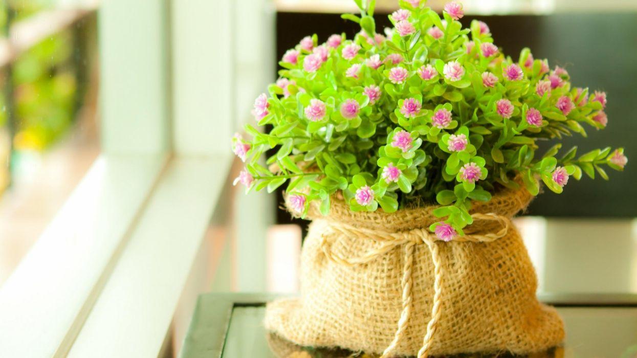 maceta plantas flores wallpaper