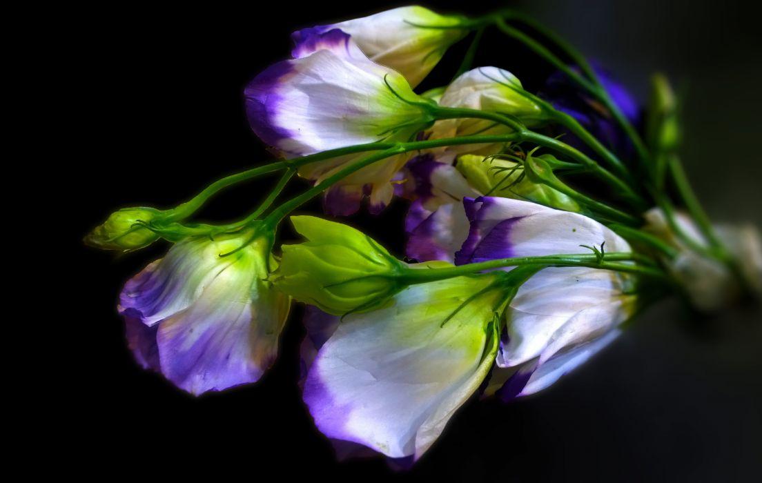 nature flower colors white bouquet  wallpaper
