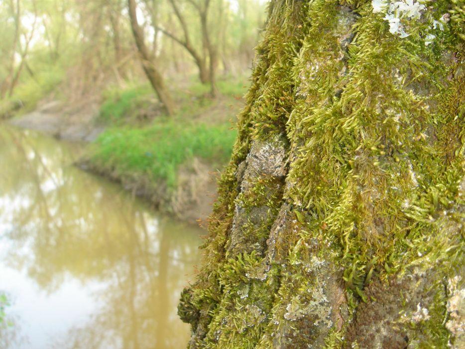 land water tree green moss nature wallpaper