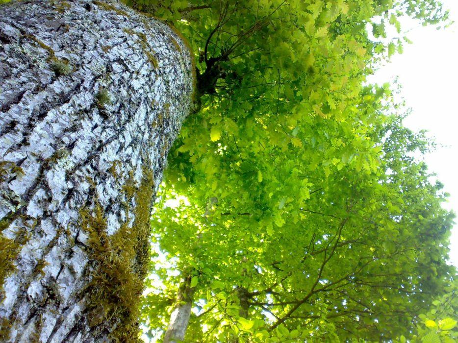 tree green nature wallpaper
