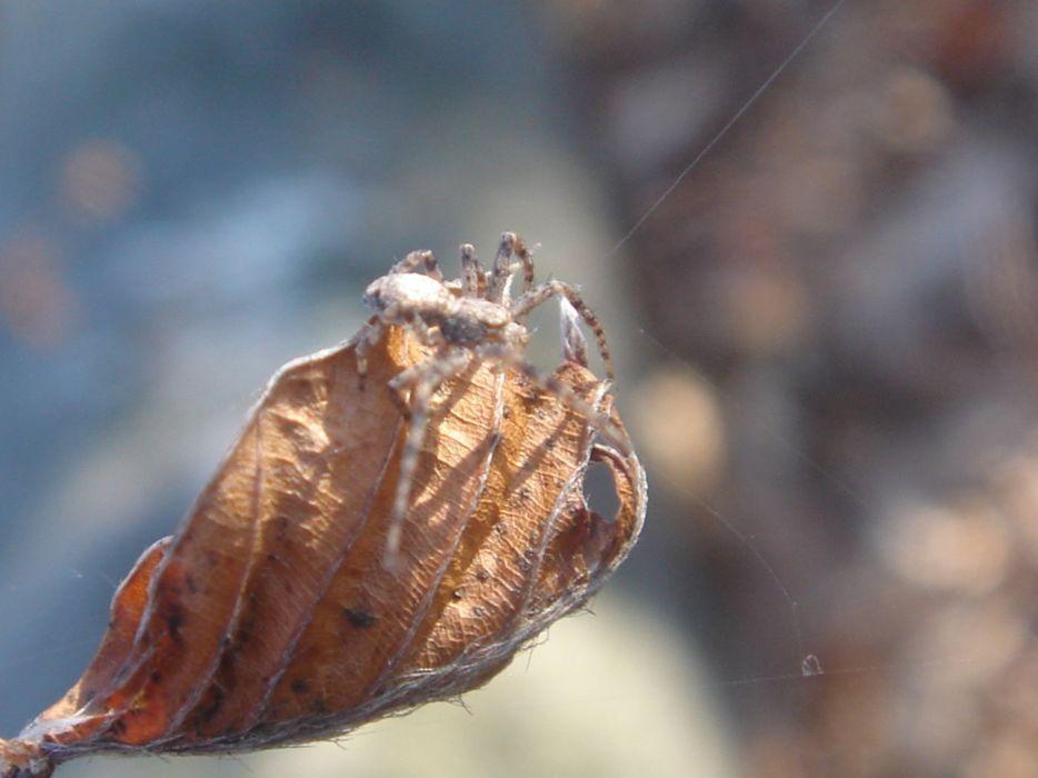 dead leaf macro brown autumn winter wallpaper