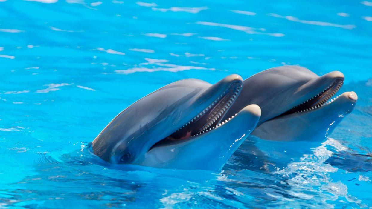 delfines mamiferos marinos animales wallpaper