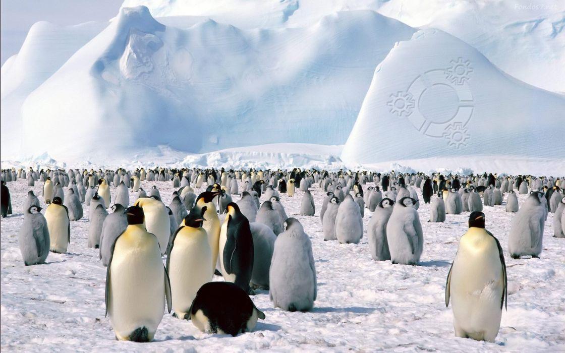 pinguinos animales artico hielo wallpaper
