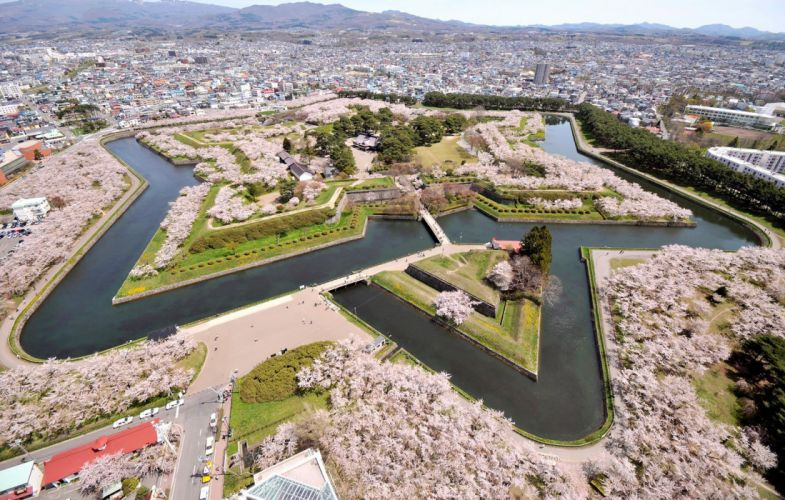 Goryokaku sakura spring flower tree nature city wallpaper