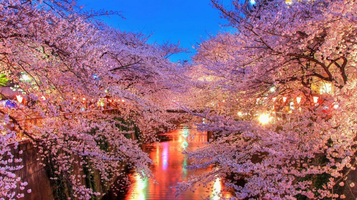 light water night sakura tokyo spring flower peoples tree nature wallpaper