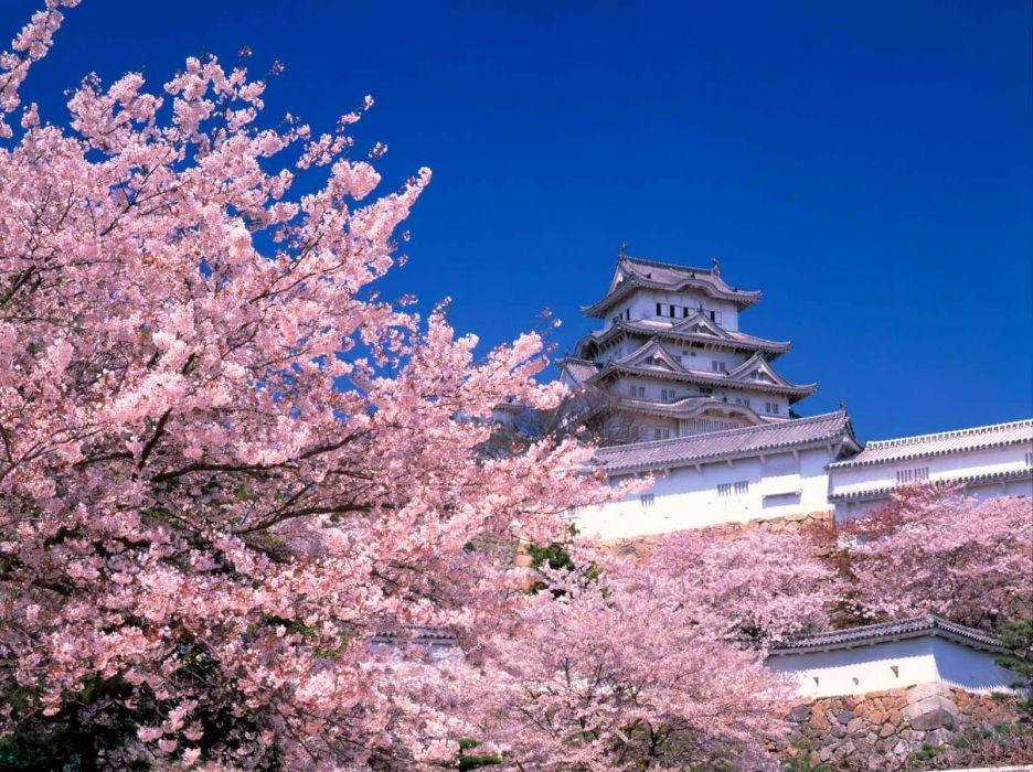himeji sakura tokyo spring flower peoples picnic tree nature wallpaper