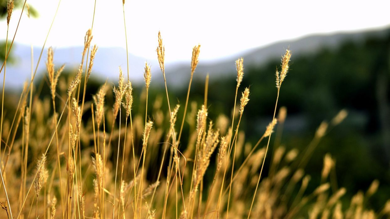 nature landscape summer sky beauty wallpaper