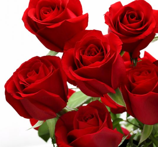 rose with love love flowers roses valentines day wallpaper