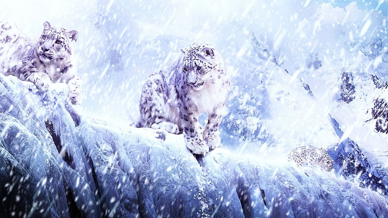 winter snow nature landscape art artwork fantasy leopard wallpaper
