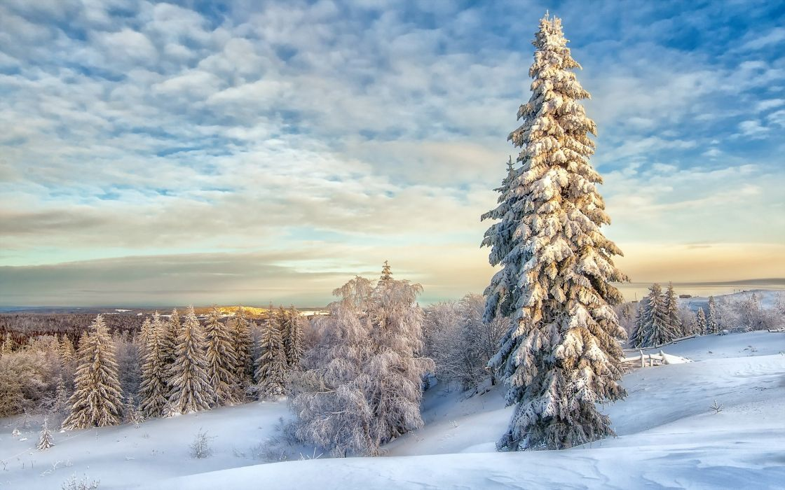 winter snow nature landscape wallpaper